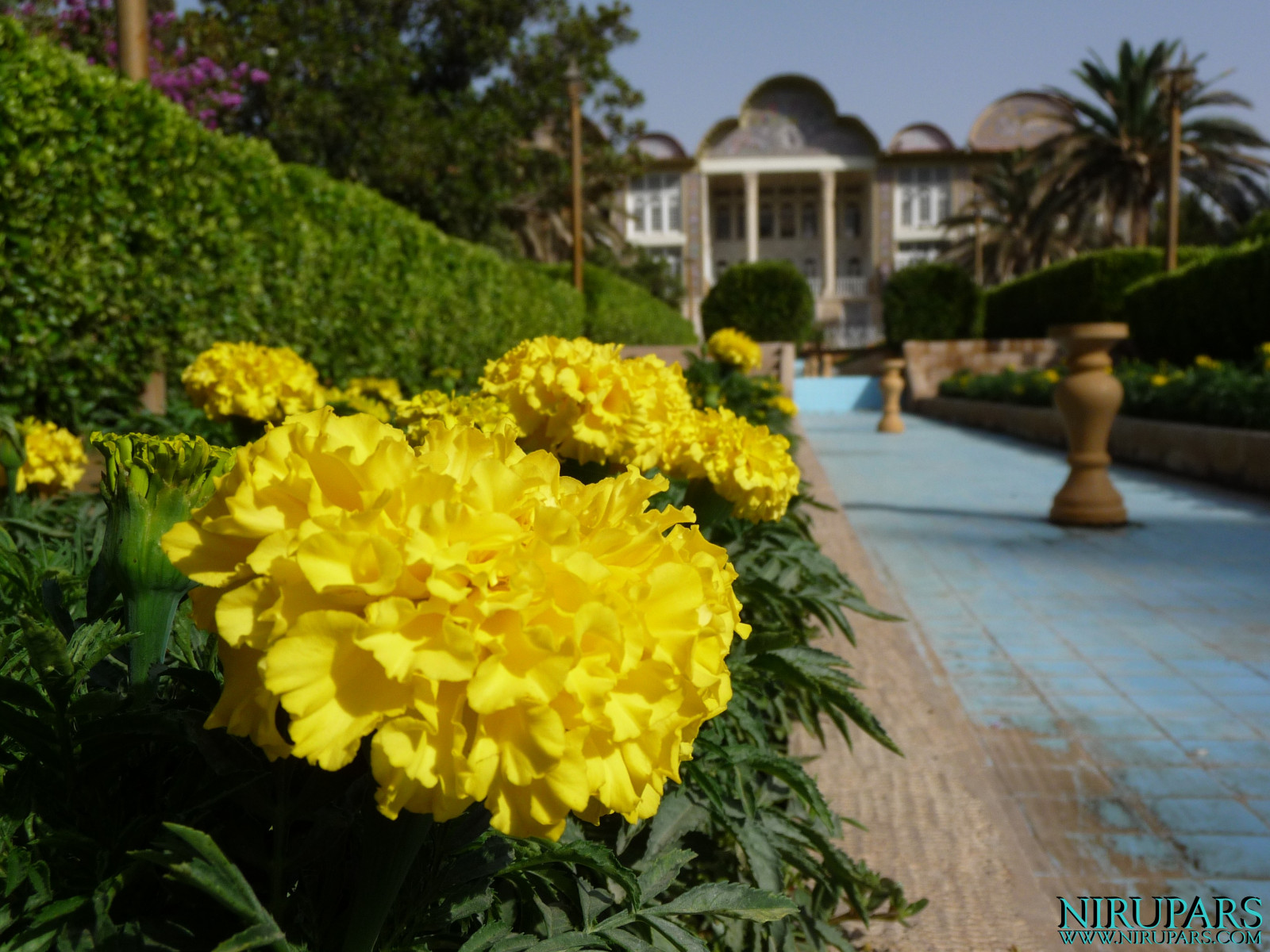 Baq-e Eram - Building - Fountain