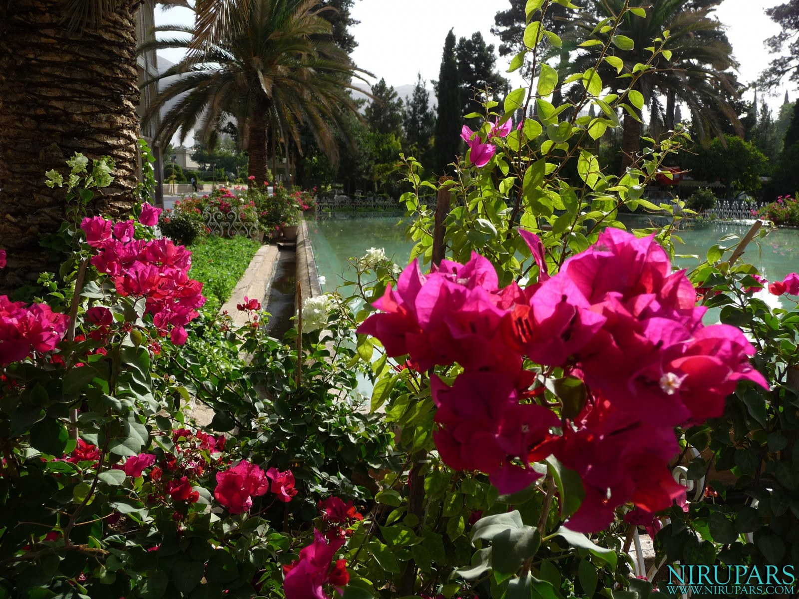 Baq-e Eram - Garden - Flower