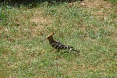 Baq-e Eram - Garden - Bird