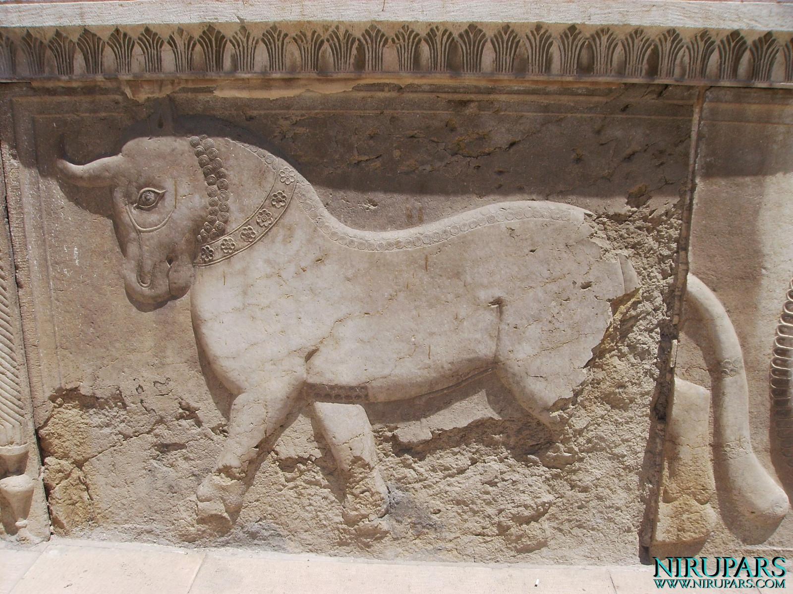 Naranjestan-e Qavam - Relief - Bull