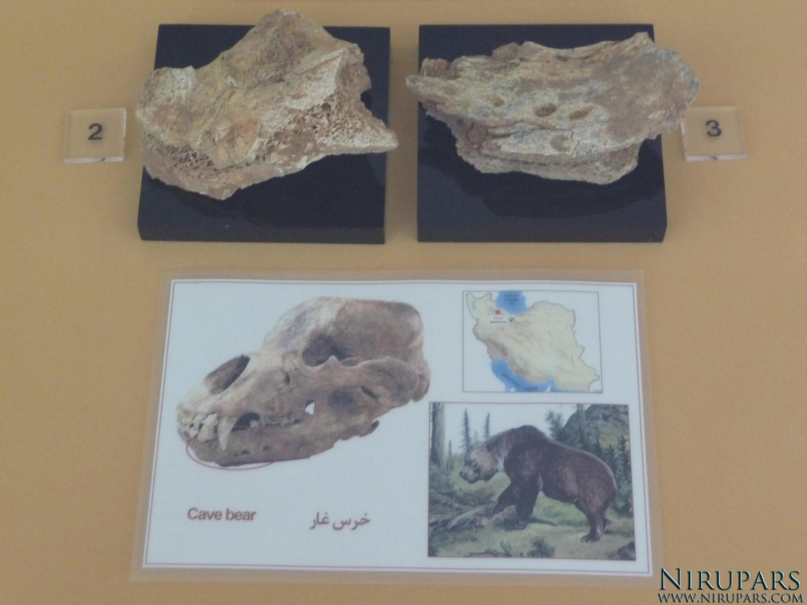 National Museum of Iran - Bone Cavebear Jaw Fragment
