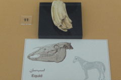 National Museum of Iran - Bone Equidae