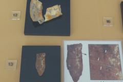 National Museum of Iran - Bones Teeth Jaw Fragment Equidae