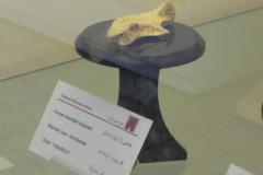 National Museum of Iran - Human Mandible