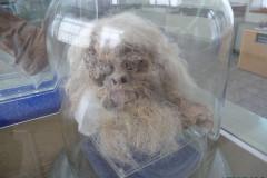 National Museum of Iran - Mummy - Skull