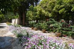 Pars Museum - Garden