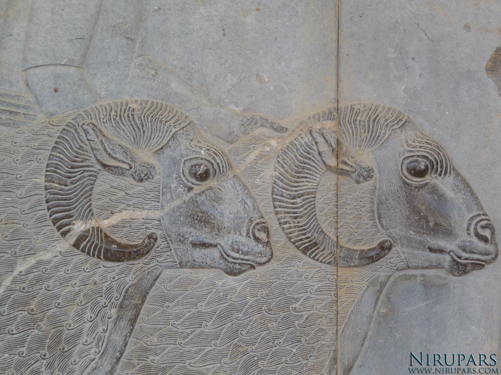 Persepolis - Apadana - East Portico - Delegation Syria - Aries