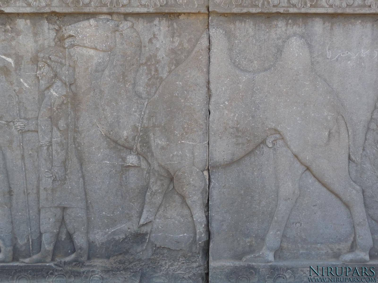 Persepolis - Apadana - North Portico - Delegation Drangiana Arachosia - Camel