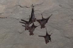 Qeshm Island - Khorbes Caves - Bats